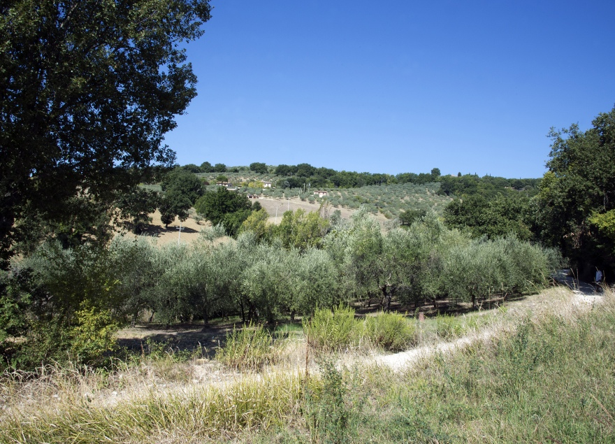 International creative olive grove, Arte Studio Ginestrelle