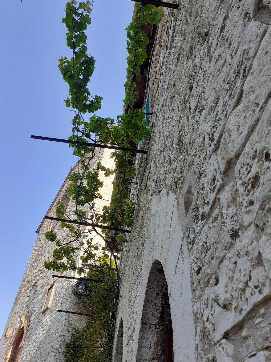 vine and sky, Santa Maria delle Rose, Assisi